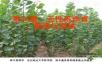 育种学课件 第六章  无性系选育、繁殖与造林1.ppt