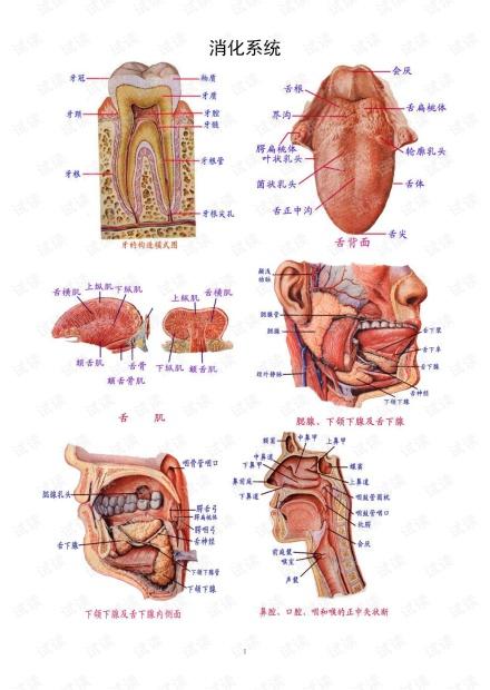 解剖学图谱。。。.pdf